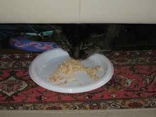 kitty-food.jpg