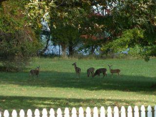 1107-deer.jpg